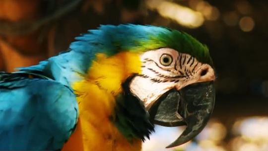 Uma Arara como capa do vídeo do ministério da cultura