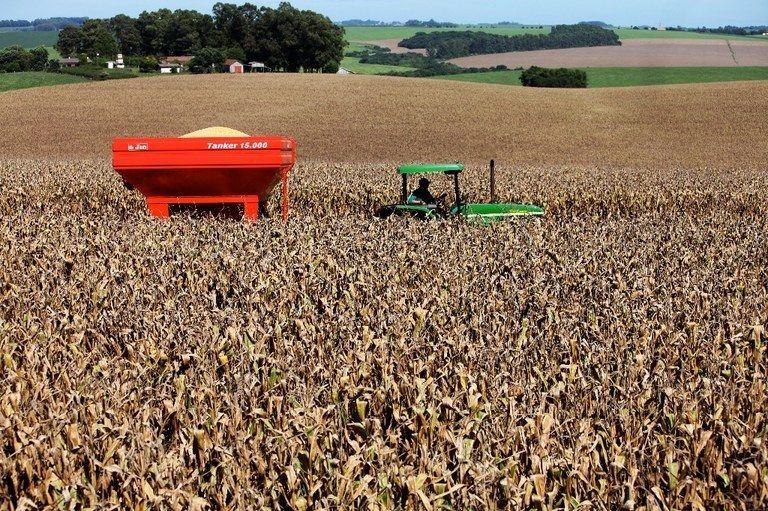 Embarques de milho somam US$ 1,34 bi em agosto, alta de 169,2%
