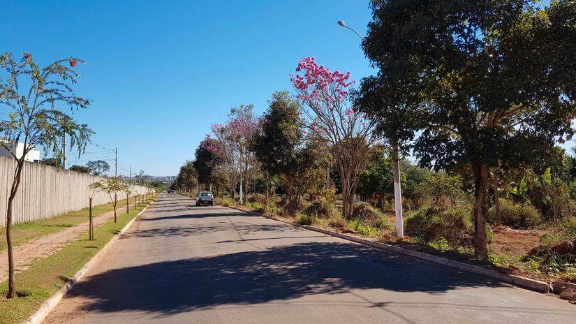 Prefeitura vai cortar árvores em obra de Parque Ambiental