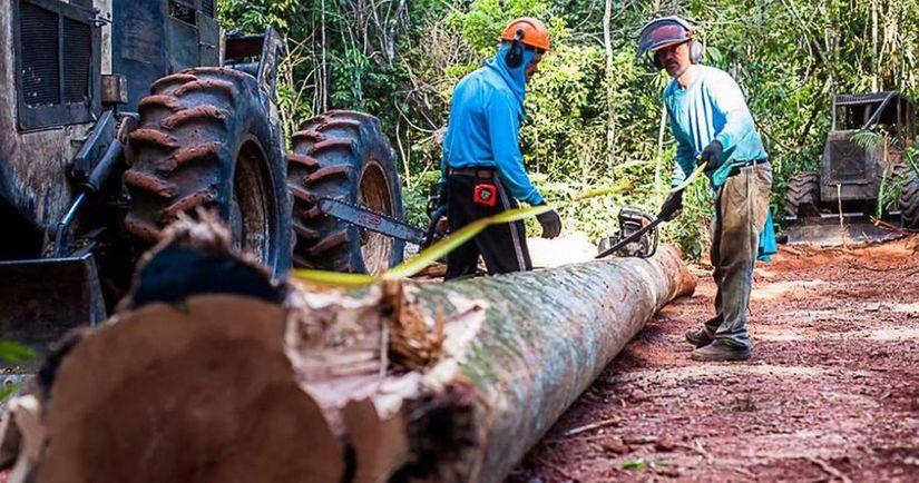 Lei que amplia em quatro vezes o consumo de madeira sem reposição é aprovada em MT