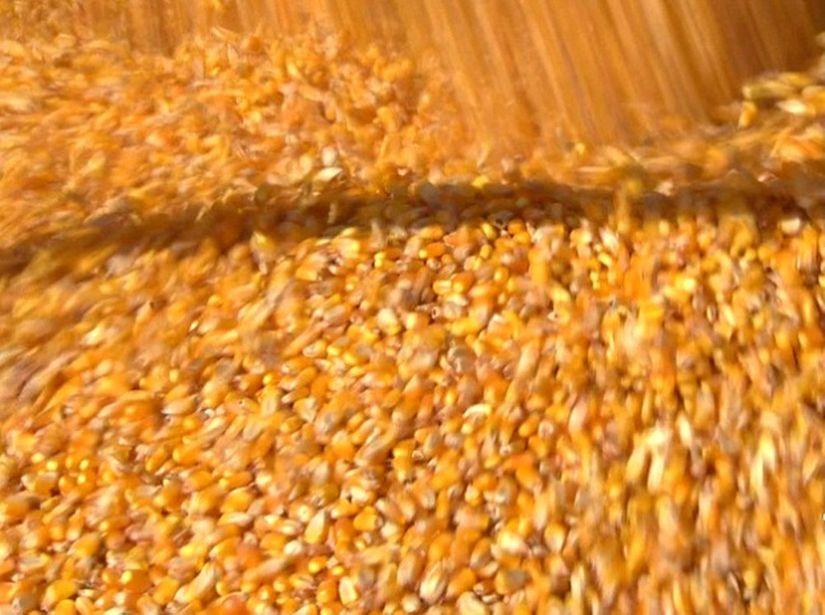 Produção de milho em MT deve ser de mais de 30 milhões de toneladas, segundo Conab