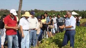 A pesquisa desenvolvida é voltada prioritariamente para a agricultura familiar. (Foto: João de Melo   Empaer)