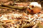 Ossada humana encontrada na Gleba Rio Vermelho ainda não foi identificada