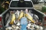 Polícia Civil apreende 437 quilos de pescado irregular