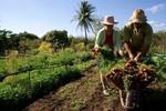 1º Encontro sobre perspectivas e demandas da Agricultura Familiar acontece na próxima quarta (22)