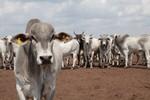Qualificação pode a minimizar a crise enfrentada pelo setor da pecuária