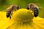 Manejo e qualificação são fatores primordiais para o sucesso da apicultura