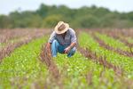 Projeto de lei garante mais uma alternativa a produtores rurais com dívidas
