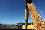 Conab leiloa 10 mil toneladas de milho em Sorriso, Diamantino e Campo Verde