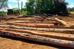 Polícia Civil combate extração ilegal de madeira e prende suspeito