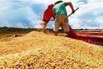 Período de colheita de soja termina neste sábado