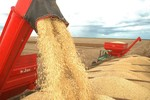 Clima ajuda produção em Mato Grosso
