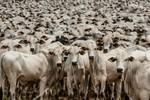Governador sanciona Lei de Defesa Sanitária Animal