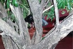 Homem é preso depois de agredir  a ex-mulher e esconder revólver em árvore