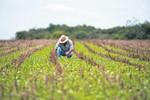 Produtores rurais têm até hoje para aderir ao parcelamento de dívidas