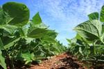 Maggi apresenta plano de infraestrutura da agropecuária amanhã em Brasília