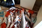 Sema apreende 91 kg de pescado irregular, armas de fogo e apetrechos em rios de MT