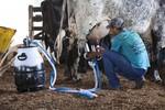 Produtores assistidos pela assistência técnica do SENAR-MT aumentam em 34% a produção de leite