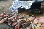 Batalhão Ambiental apreende mais de 1 tonelada de pescado e prende dois em Pedra Preta