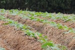 Conservação do solo é sinônimo de bons rendimentos