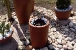 Plantas ornamentais e gramas são furtadas de canteiros na Avenida dos Estudantes