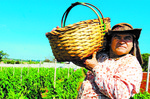 CNA prevê expansão de 2% do agronegócio em 2017