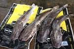 Polícia Ambiental apreende 26 kg de Cachara