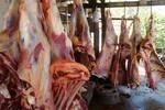 Mais de 500 quilos de carne são apreendidos em matadouro clandestino