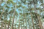 Araguaia Florestal acontece no próximo dia 22, indústria de celulose será o foco