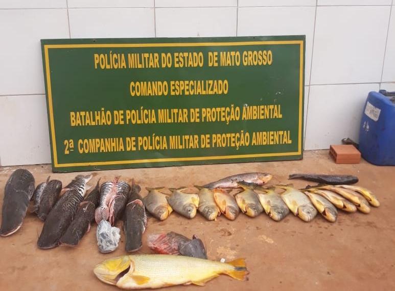 Peixes apreendidos pela polícia na casa do suspeito. (Foto: divulgação PM/MT)