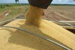 IBGE estima alta de 4,2% na produção agrícola do Brasil