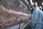 Brasil acionará OMC para mais uma vez contestar barreira da Indonésia a carne de frango
