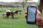 Aplicativo permite acompanhar crescimento e reprodução do rebanho leiteiro