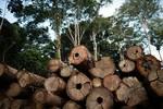 Justiça pede condenação de madeireira e indenização deve ser paga no valor de R$ 1,4 milhão