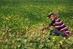 Assentados da Reforma Agrária receberão Fomento Produtivo do Incra através da Empaer