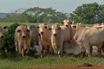 Acrimat diz que suspensão do embargo da carne bovina de MT não minimiza prejuízos no campo