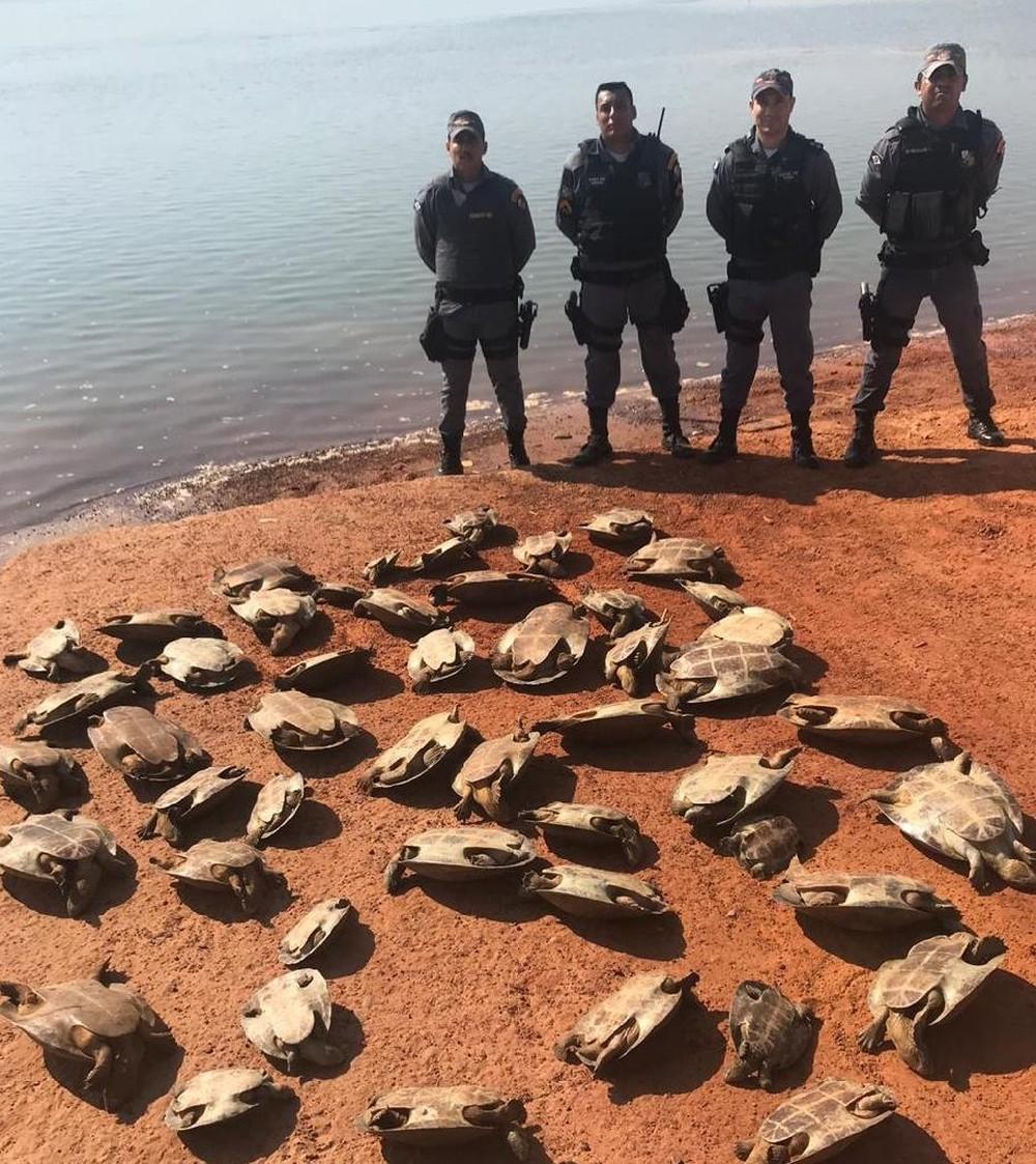 Animais libertados pelos policiais militares. (Foto: divulgação PM/MT)