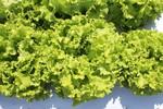 Brasília sediará em 2020 reunião internacional de proteção de cultivares