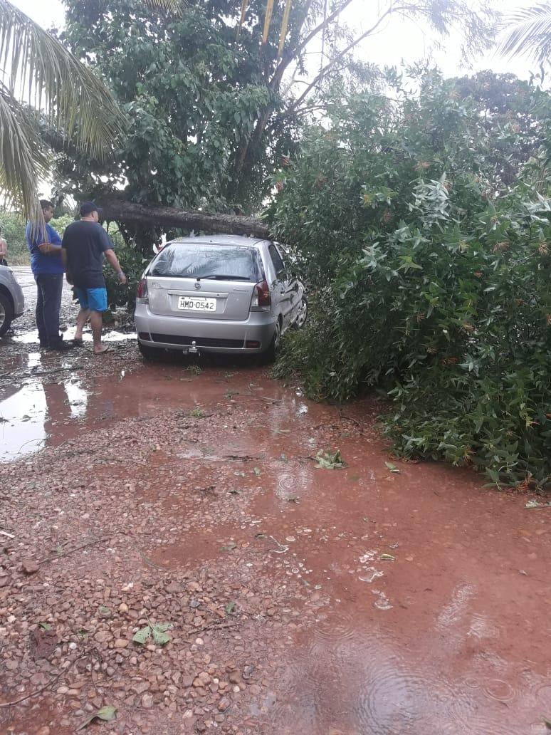 Outro carro atingido por uma árvore. (Foto: rede social)