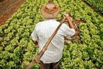 Mudanças no Pronaf beneficiam cooperativas da agricultura familiar