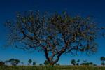 Sema realiza Semana do Meio Ambiente na região Sul de Mato Grosso