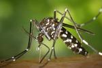 Casos de chikungunya no Mato Grosso aumentam 3,5 vezes este ano