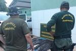 Ação conjunta entre Sema e Polícia Ambiental apreende 200 kg de pescado