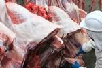 MT bate recorde em exportação de carne bovina