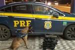 Dois são interceptados pela PRF com 21 kg de maconha e cocaína em ônibus de viagem