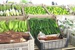 Cotação agrícola mostra variação de até 142% nos preços de produtos da agricultura
