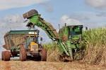 Produção de etanol no Brasil deve cair 4,6% em 2019, diz governo