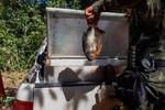 Sema e Polícia Ambiental apreendem pescado e armas no Rio Itiquira