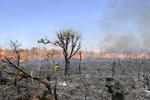 Com número recorde de queimadas, fumaça cobre os céus do Brasil