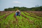 Agricultura estuda mudar financiamento do agronegócio e seguro rural